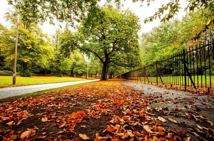 Осень, природа, листья, лес, парк, деревья, дорога