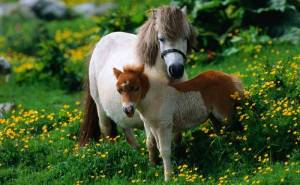 Лошадь жеребёнок трава животные horse