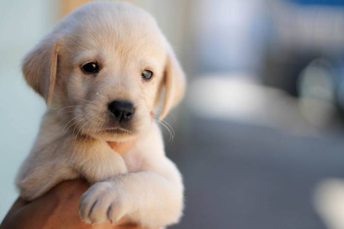 Щенок, собака, животное, зверь, морда, рука, puppy