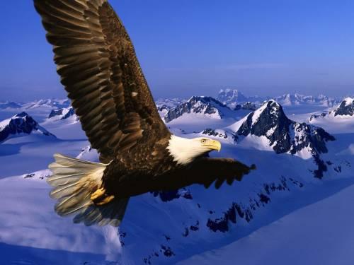 Орёл, Eagle, небо, горы