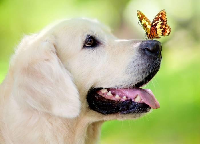 Собака, бабочка, боке, животное, dog, butterfly