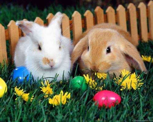 Кролики, пасхальный яйца