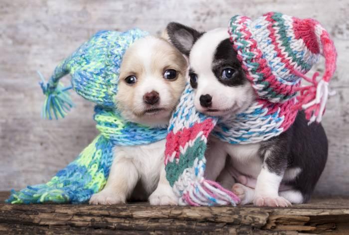 Щенки, шапки, шарфики, животные, собаки, puppies