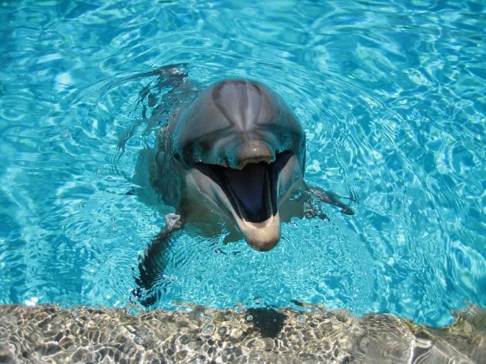 Дельфин, улыбка, вода, dolphin, water