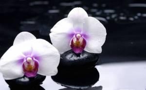 Орхидеи черные камни цветы белые