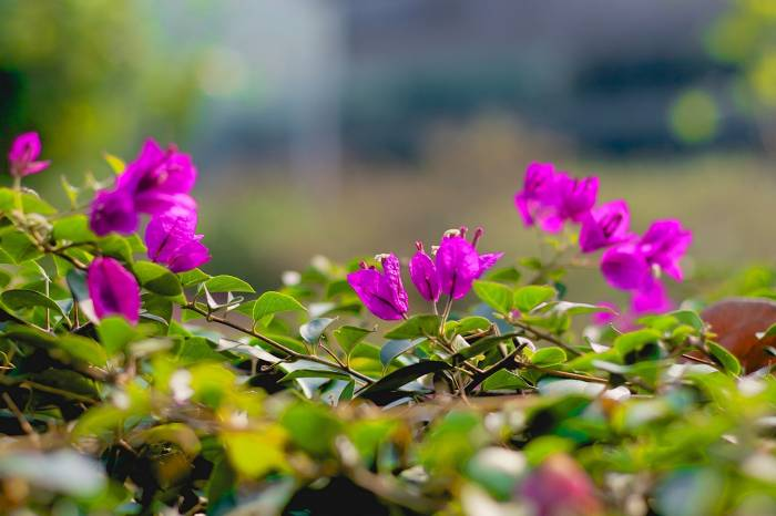 Ветки, цветы, розовые, листья, twigs, flowers