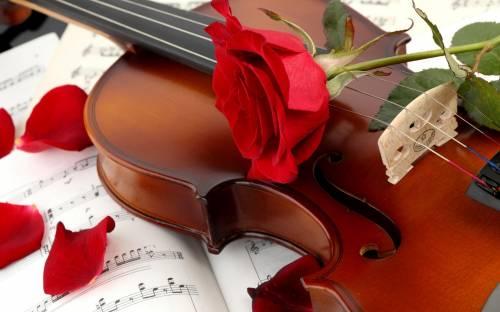 Красная роза, лепестки, скрипка