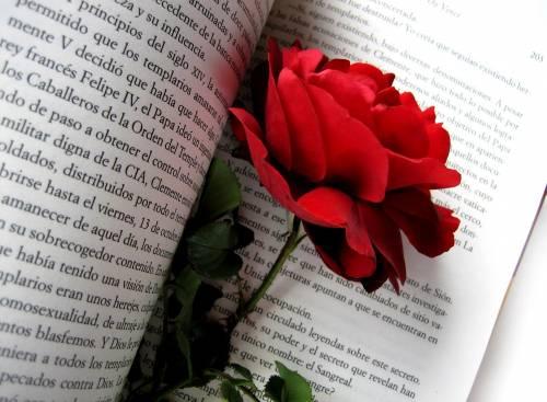 Красная роза, книга, шипы, текст