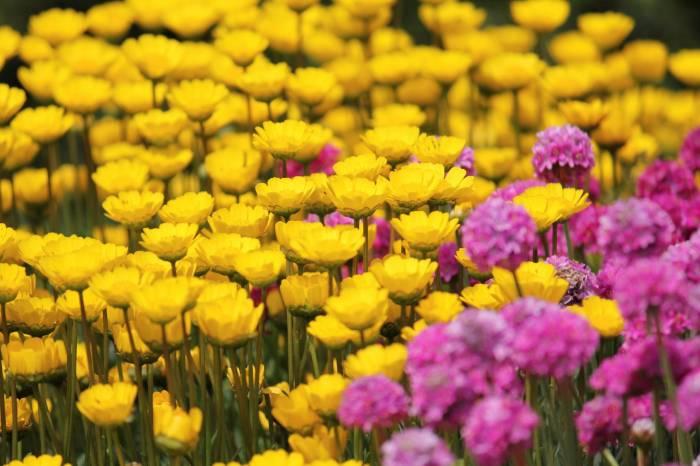 Цветы, цветочки, поле, розовый, желтый, flowers
