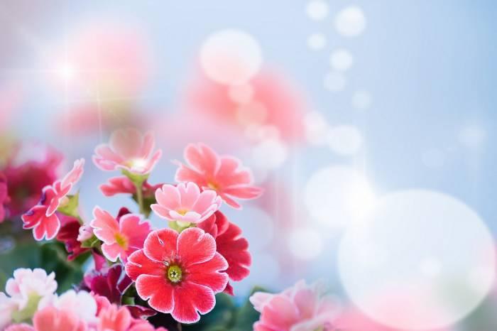 Боке, цветы, нежность, лепестки, bokeh, flowers