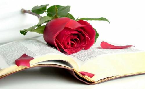 Библия, роза, книга, flower, rose, красота
