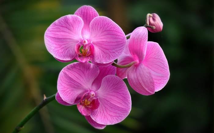 Орхидея, макро, экзотика, цветы, растение, orchid