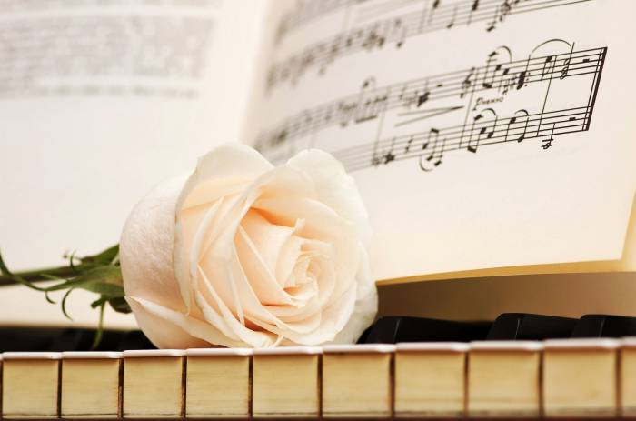 Роза, белая, клавиши, ноты, пианино, rose, white