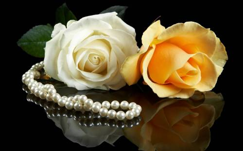 Цветы, розы, flowers, парочка, желтый, белый